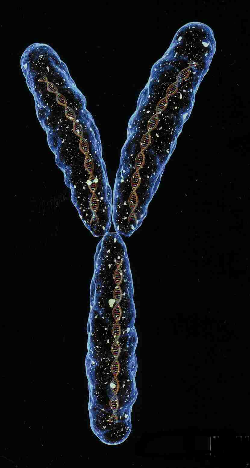 The large varie... Y Chromosome Microdeletion